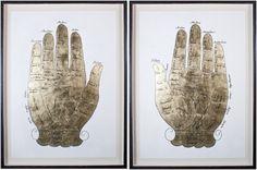 Gallicus Hands [Natural Curiosities]