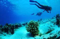 Pemba Island, Tanzania SCUBA diving.