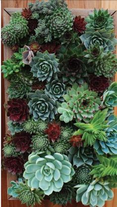 How to Make DIY Succulent Wall Art