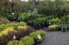 Our trees and shrubs. Trees And Shrubs, Garden, Plants, Garten, Lawn And Garden, Gardens, Plant, Gardening, Outdoor