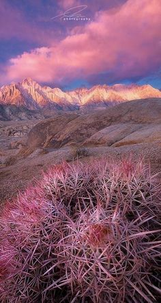 pink sunrise, BLM Alabama Hills Recreational Area ~ Mt Whitney and the Sierra Nevada Mountains in the background, CA