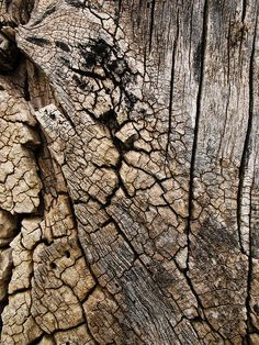 hope you guys can find some good uses from these tree bark textures!, I hope you guys can find some good uses from these tree bark textures!, I hope you guys can find some good uses from these tree bark textures! Wood Texture, Texture Art, Plaster Texture, Natural Forms, Natural Texture, Patterns In Nature, Textures Patterns, Organic Patterns, Wood Bark