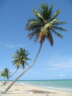 Alagoas, Brazil. I think I would look great under that palm tree!