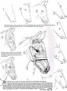 Scanning Around With Gene: Drawing with Walter T. Foster   CreativePro.com