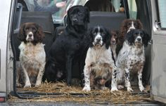 Gundog expert Ben Randall highlights the training mistakes we should be careful to avoid.
