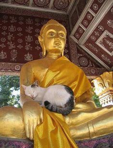 *Cat nap with Buda Animals And Pets, Funny Animals, Cute Animals, Cute Kittens, Cats And Kittens, Kitty Cats, Crazy Cat Lady, Crazy Cats, Gatos Cool