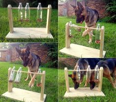 DIY Spinning Plastic Bottle Dog Treat Game
