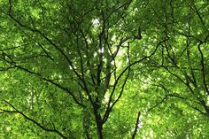 Green Forest in Spring - Wall Mural & Photo Wallpaper - Photowall