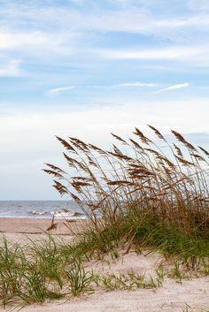 Sand Dunes and Sea Oats