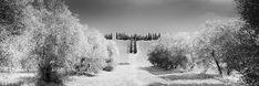 Black And White Landscape, Black White, Panorama Camera, Landscape Photography, Art Photography, Photographic Film, Rural House, Cypress Trees, Black And White Photography