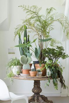 Plant Inspiration | Bring Your Plants Indoors | Plant Table