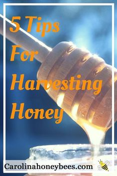 Every new beekeeper needs tips for harvesting honey from a beehive. Carolina Honeybees #beekeepingtips