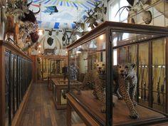 Trophy Room, Musée de la Chasse et de la Nature
