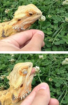 40 reptiles qui vont vous faire fondre de tendresse grâce à leur apparence très…