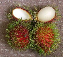 The #rambutan is botanically named as Nephelium lappaceum. To people of Malaysia, Thailand, the Phillippines, Vietnam, Borneo, and other countries of this region, the rambutan is a comparatively common fruit like an apple which is common to many people in cooler climates.