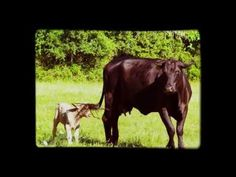 Every Day is Mother's Day at Goose's Roost Ranch in Flatonia, Texas