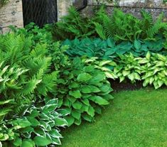 hosta/fern starter collection by may