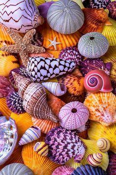 Shells Photograph - Ocean treasures by Garry Gay Stone Wallpaper, Nature Wallpaper, Pinky Wallpaper, Deco Marine, Seashell Crafts, Shell Art, Colorful Wallpaper, Sea Creatures, Belle Photo