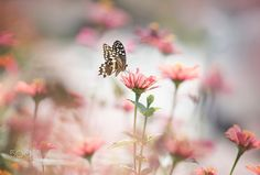 Pink by Lee Peiling on 500px