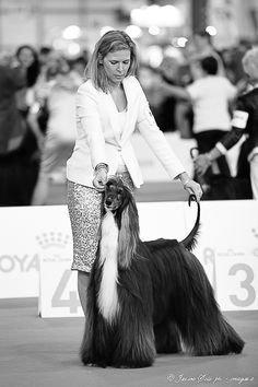 Magyar Agar, Tibetan Terrier, Afghan Hound, Irish Wolfhound, Italian Greyhound, Dog Show, Whippet, Mans Best Friend, Best Dogs