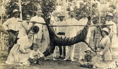 Sumatra, 1915.