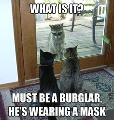 What is it? Must be a burglar, he's wearing a mask.