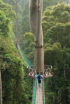 Brave the canopy walkway in Danum Valley, Malaysia.