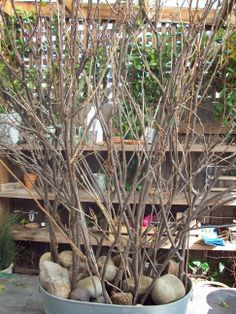 families collect branches on nature walk. talk home to decorate. bring back to display with class.