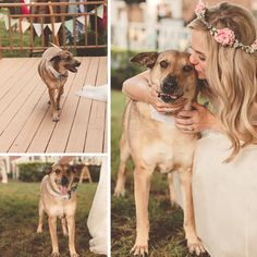 dogs at weddings | Katy & Parker Wedding | All Sorts of Pretty