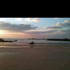 Horses on a Guernsey beach