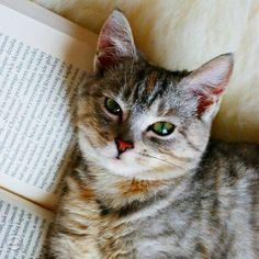 A ty co dziś czytasz?  #kot #książka #book #cat #mycat #ilovebooks #kochamczytać