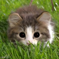 """""""For every one cute cat picture, there are zillions that were never taken."""" --Karen Anderson"""