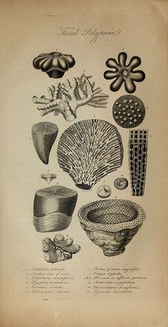 Underwater fossils.