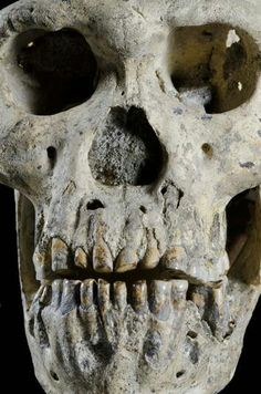 In light of last week's announcement of the Dmanisi skull—and the possibility that all early Homo fossils were part of one species—some researchers posit that our early hominin ancestor, Homo erectus, might have been more like baboons than chimpanzees.  http://www.archaeology.org/news/1459-homo-erectus-chimpanzees-babboons-dmanisi