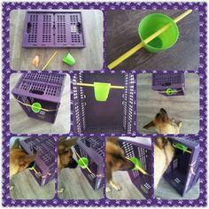 Spel 13 (hondenspel hond spel denkwerk hersenwerk brain dog game play diy)