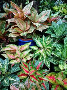Tropical Garden, Tropical Plants, Balinese Garden, Garden Retaining Wall, Spring Flower Arrangements, Belle Plante, Variegated Plants, Calathea, Garden Guide