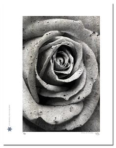 """The Soul of Fibonacci. """"The Soul of Fibonacci"""" is a photograph of a rose composited with a photograph of cracked stone to give texture - a nod to famed Italian mathematician, Leonardo Fibonacci. Technical Information: This is a limited edition photograph produced on Epson Premium Presentation Fine Art Matte Media using an archival pigment. Each photograph is produced, signed and numbered by the artist. Only one hundred or fewer prints are produced in each series. Prints are delivered in a..."""