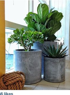 Indoor plants in concrete pots, or lightweight plastic with painted finish