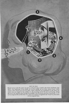 """The DJs in your head. """"How You Hear"""", a vintage medical book illustration"""