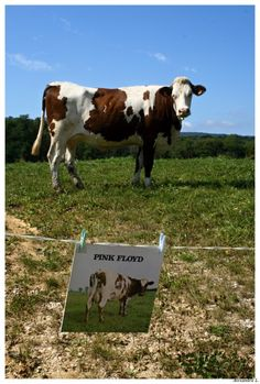 alexaphoto: Alexandra L. - Pink Floyd - Atom Heart Mother, 1970. Meyriat, Ain, France.