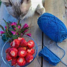 Pus, Rauma garn og strikke sokker. Vi liker katten vår! Instagram