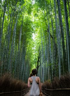 préparer son voyage au Japon bambouseraie arashiyama