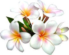 Les 14 Meilleures Images De Dessin Hibiscus Dessin
