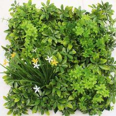 Топ-9 комнатных растений, которые увлажняют воздух в доме и дарят здоровье - Я Покупаю Herbs, Herb