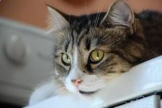 Taking the mystery out of cat behavior in the August issue of Spot! Cat Behavior, Litter Box, Training Tips, Mystery, Pets, Animals, Magazine, Animales, Animaux