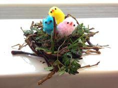 Vogels gaan binnenkort weer volop aan de slag met het maken van een nest. Laat je leerlingen in een wedstrijd een net zo sterk en fijn nest creëren als vogels. http://www.biologieplusschool.nl/nieuws/doen/slimme-vogels-ontwerpen-een-nest