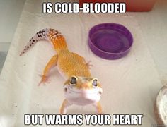 When ever I am sad, I just look at this photo. The sad thing is, this photo just makes me more sad because I really want my own little leopard gecko!