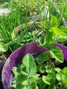 starostlivost o bylinky