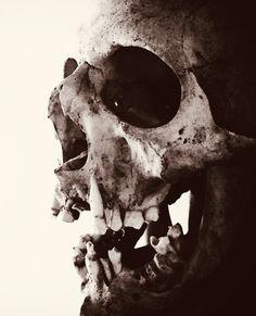 Tattoo Caveira, Tattoo Filler, Skull Reference, Skull Anatomy, Dance Of Death, Skulls And Roses, Human Skull, Arte Horror, Skull Tattoos