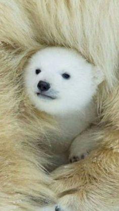 Warm In Mamas Fur!